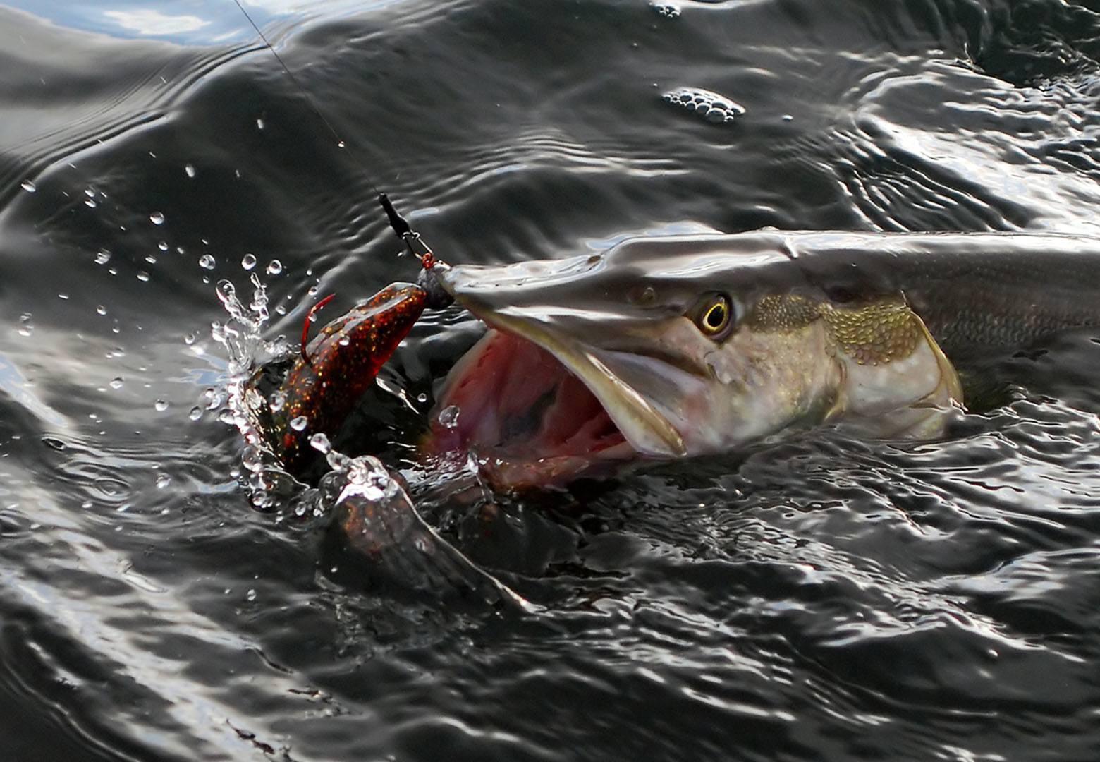 Angeln - Müritzfischer