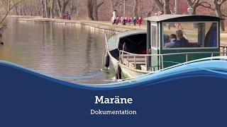 Die Müritz-Maräne - eine Müritzfischer-Doku über nachhaltigen Besatz und selektiven Fang :: Müritzfischer