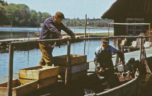 Die 60er Jahre :: Müritzfischer