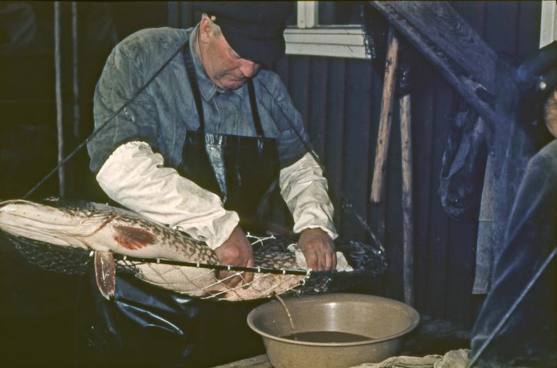 Die 70 er Jahre :: Müritzfischer