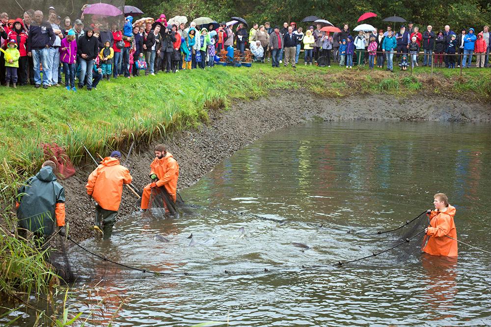 Traditionelles Abfischfest :: Müritzfischer