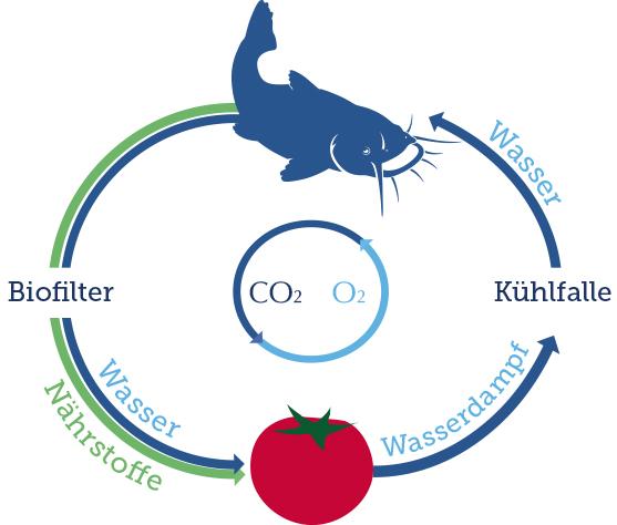 Der Aquaponik-Kreislauf